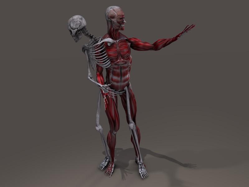 muscle-or-joint-edmonton-chiropractors