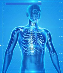 human-skeleton-163715_1280-e1432845421333